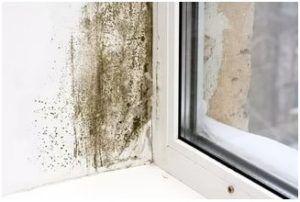Пример плесени рядом с окнами
