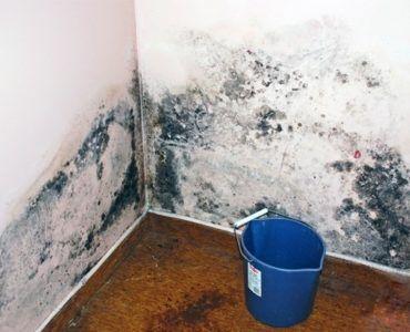 Пример образования плесени на стенах