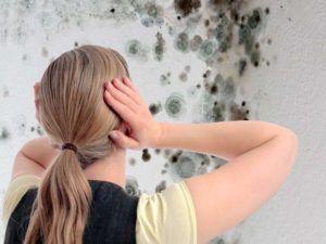 Антигрибковая обработка стен