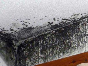 грибок стена